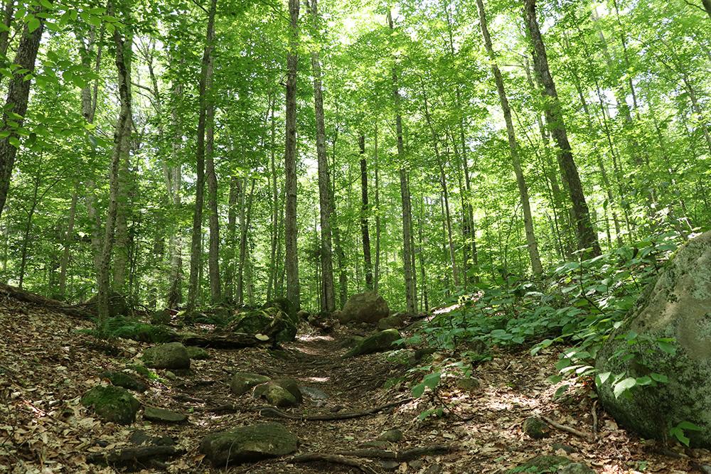 Uploaded Image: /vs-uploads/climatelawinparkblog/OldForge_Forest.jpg
