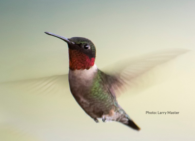10 Facts About Hummingbirds – And other interesting tidbits