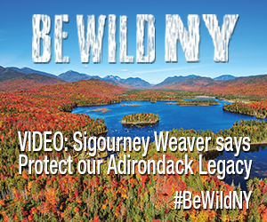Uploaded Image: /vs-uploads/images/BeWildNY Video 300x250 v1.jpg