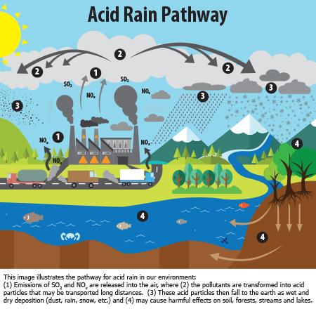 Uploaded Image: /vs-uploads/images/Acid Rain Pathway.jpg