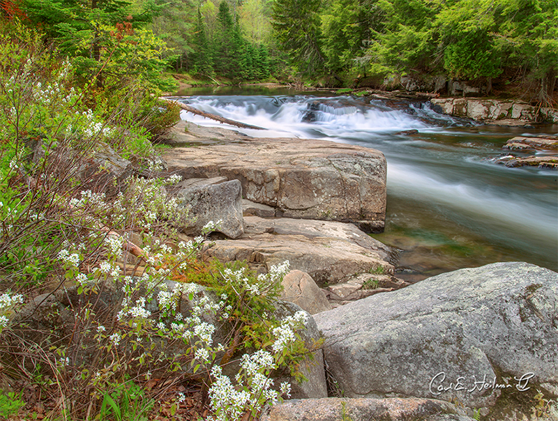 West Branch Ausable River