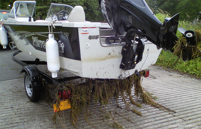 Uploaded Image: /vs-uploads/images/Boat_with_plants_Mike_McMurray.jpg