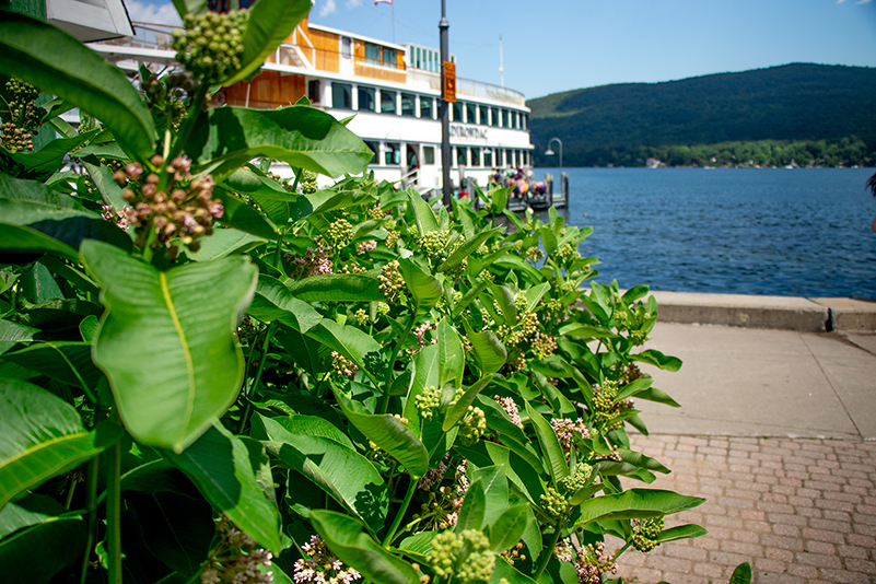 Uploaded Image: /vs-uploads/pollinator-blog/Lake_George_Plants.jpg