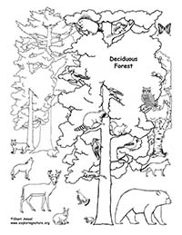 Color a deciduous forest